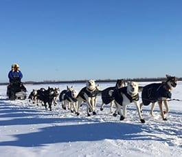 week-long-dog-mushing-tours-in-Alaska
