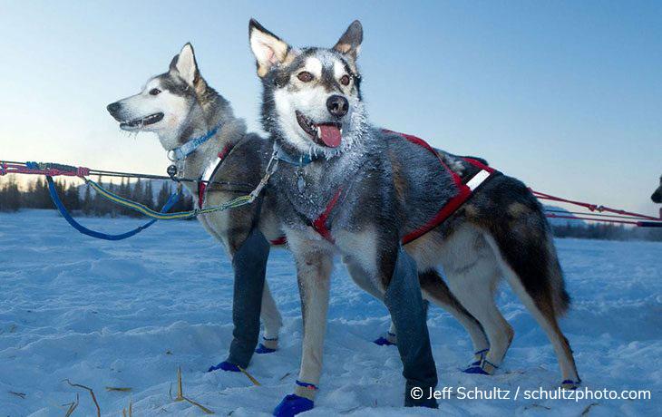 Alaska Full-Day Dog Sledding Tour