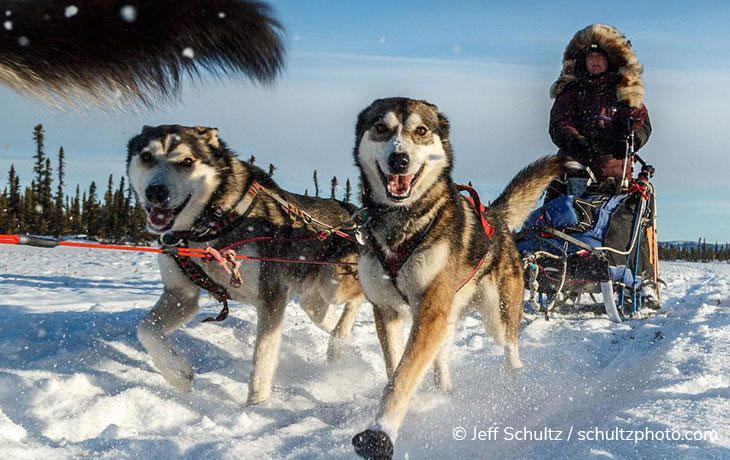 Alaska Half-Day Dog Sledding Tour